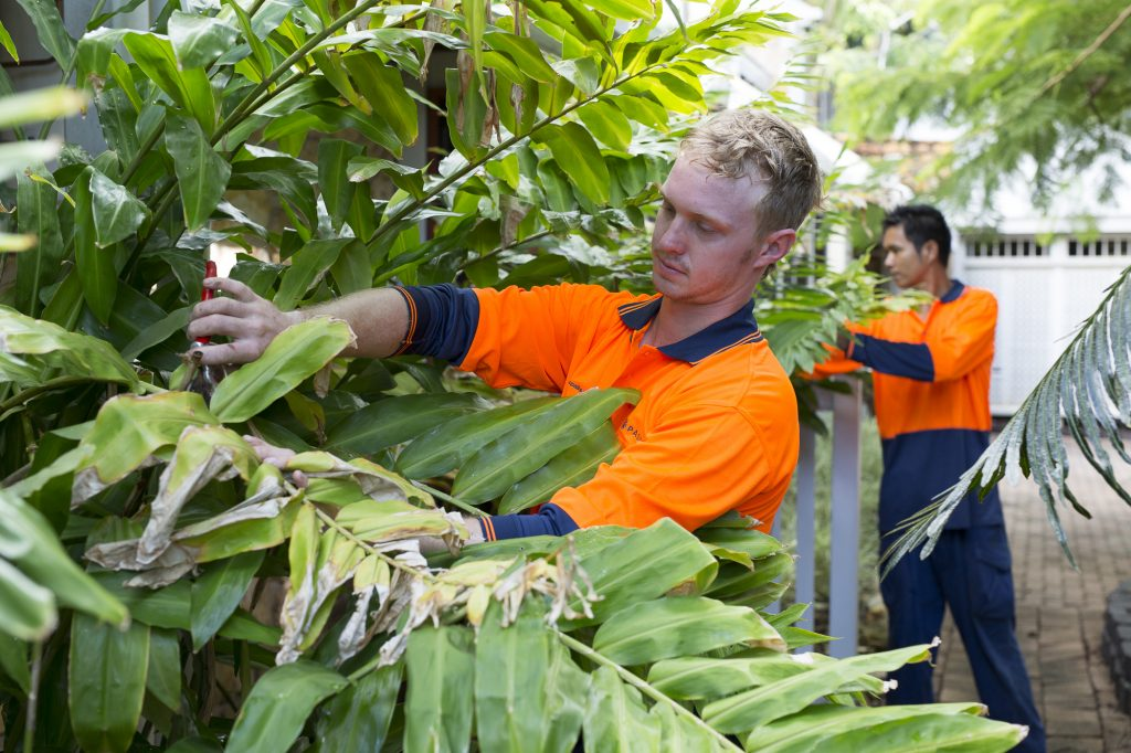 Paspalis Facility Services, gardening
